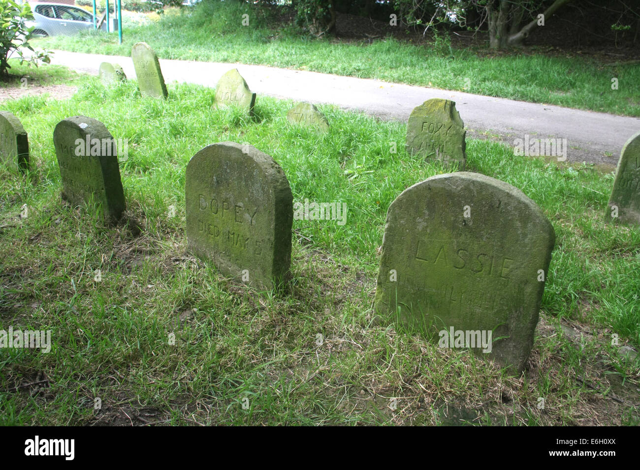 Dog graves in a Swansea park, South Wales, UK - Stock Image