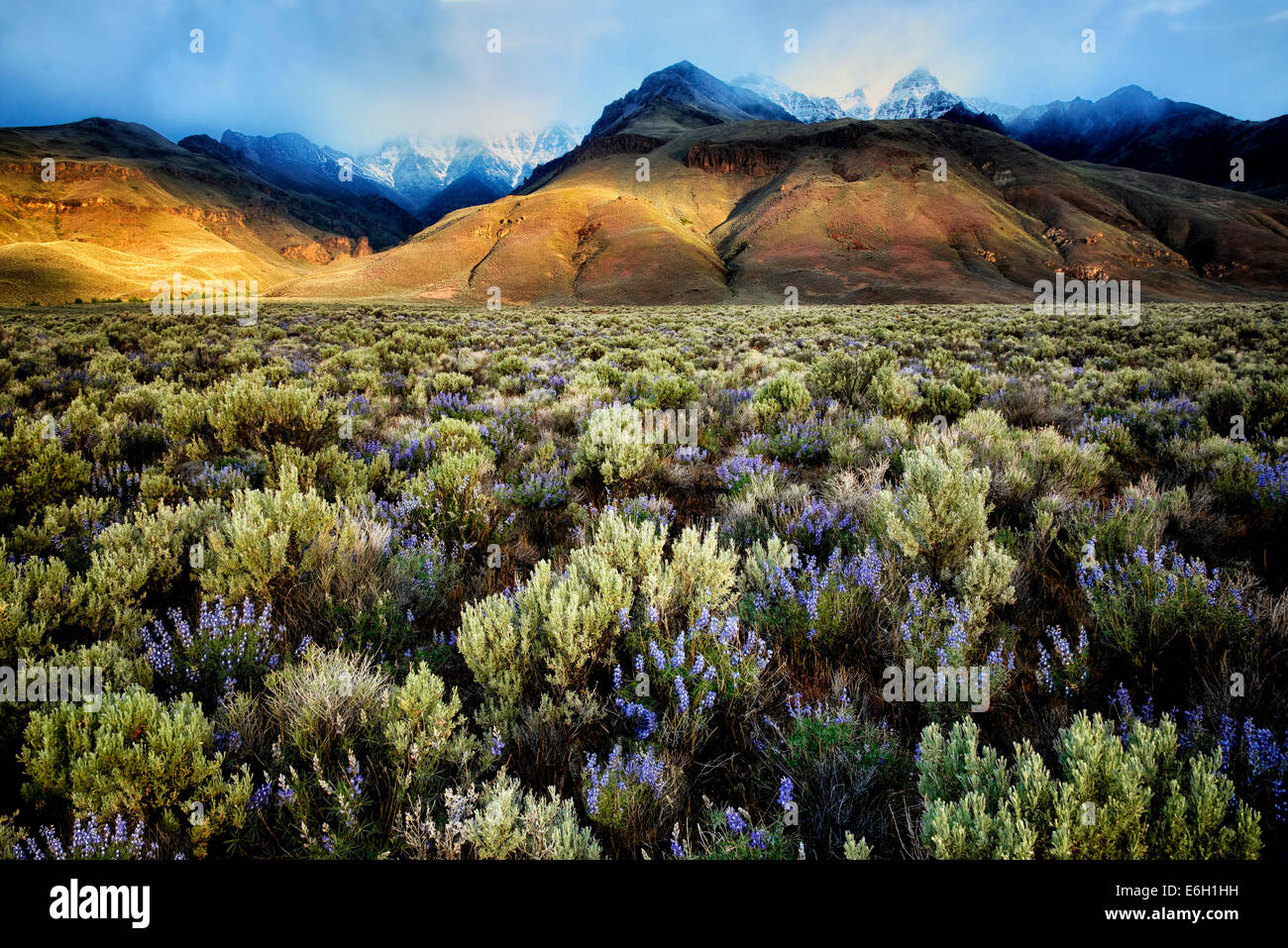 Sun peaking through on Steens Mountain with lupine wildflowers. Oregon - Stock Image