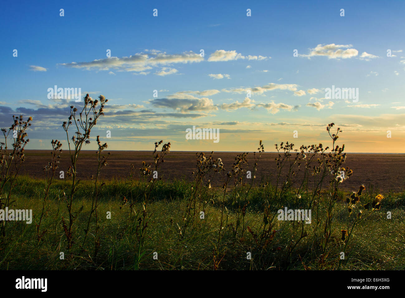 Summer evening in countrside - Stock Image