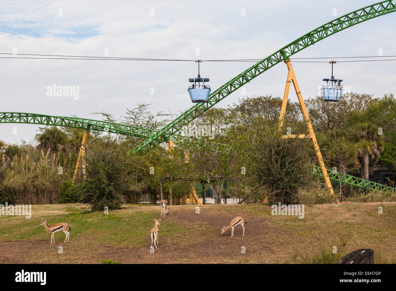 Busch Gardens Tampa Theme Park Stock Photos & Busch Gardens Tampa ...