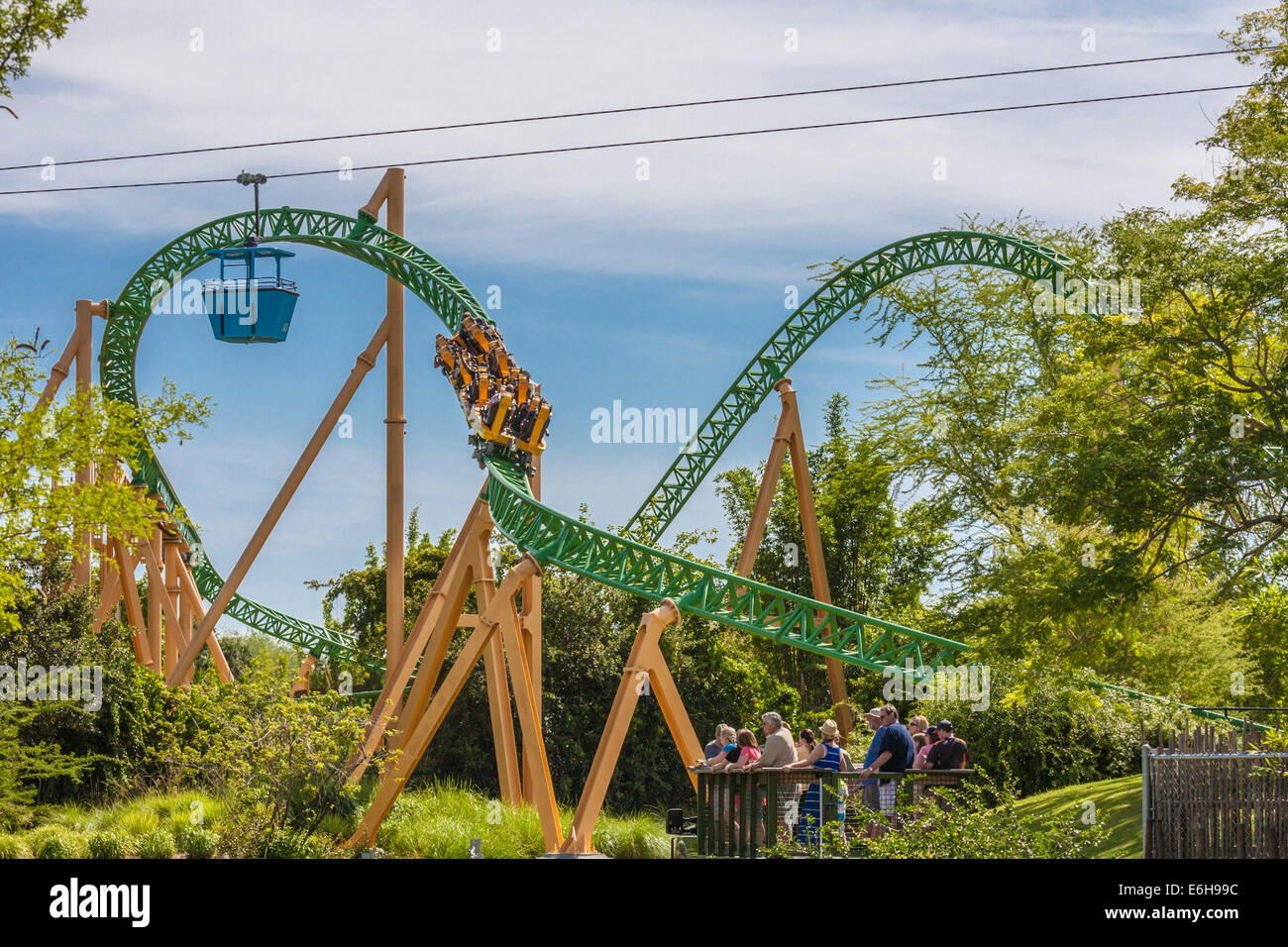 Park Guests Riding Cheetah Hunt Roller Coaster At Busch Gardens Tampa Bay  In Tampa, Florida