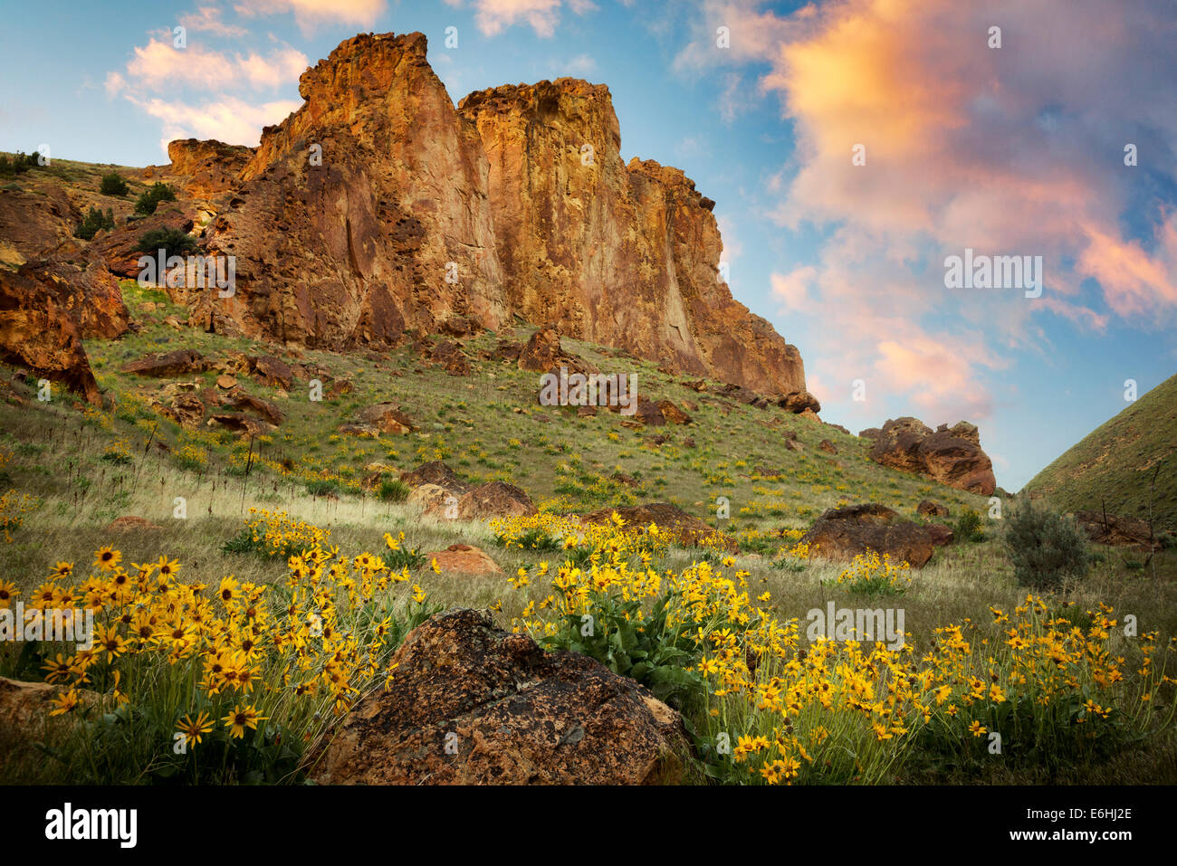 Balsamroot wildflowers and rock formations in Leslie Gultch. Malhuer County, Oregon - Stock Image