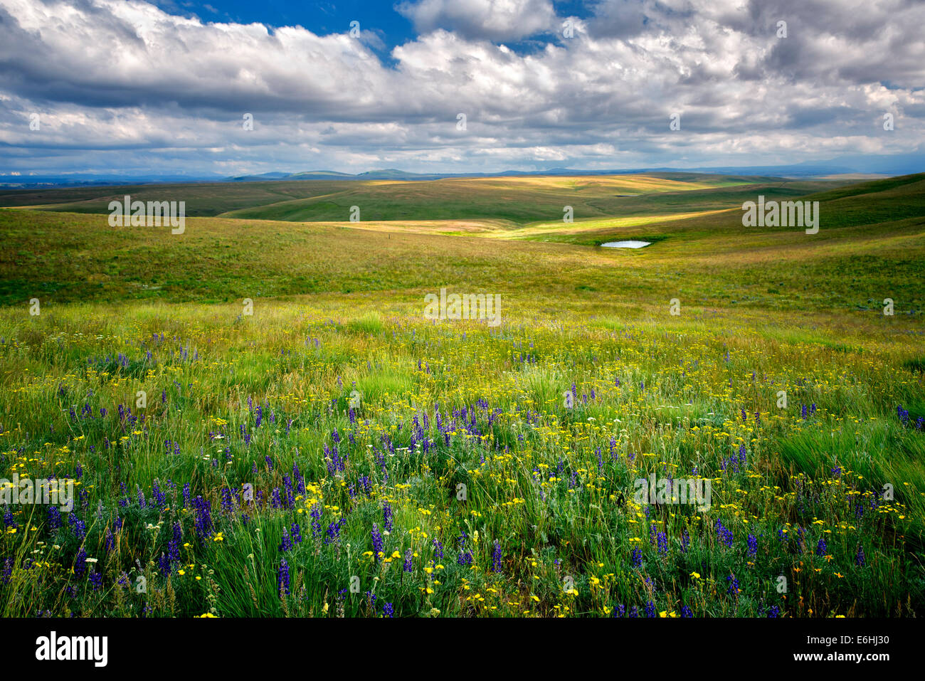 Wildflowers ,meadow, pond and pioneer cabin. Zumwalt Prairie, Oregon - Stock Image