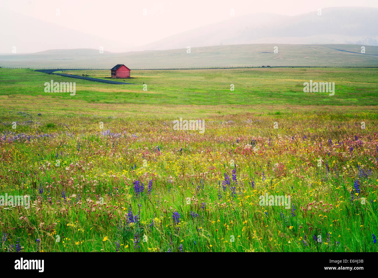 Zumwalt Prairie Preserve with wildflowers and barn in rain storm. Oregon - Stock Image