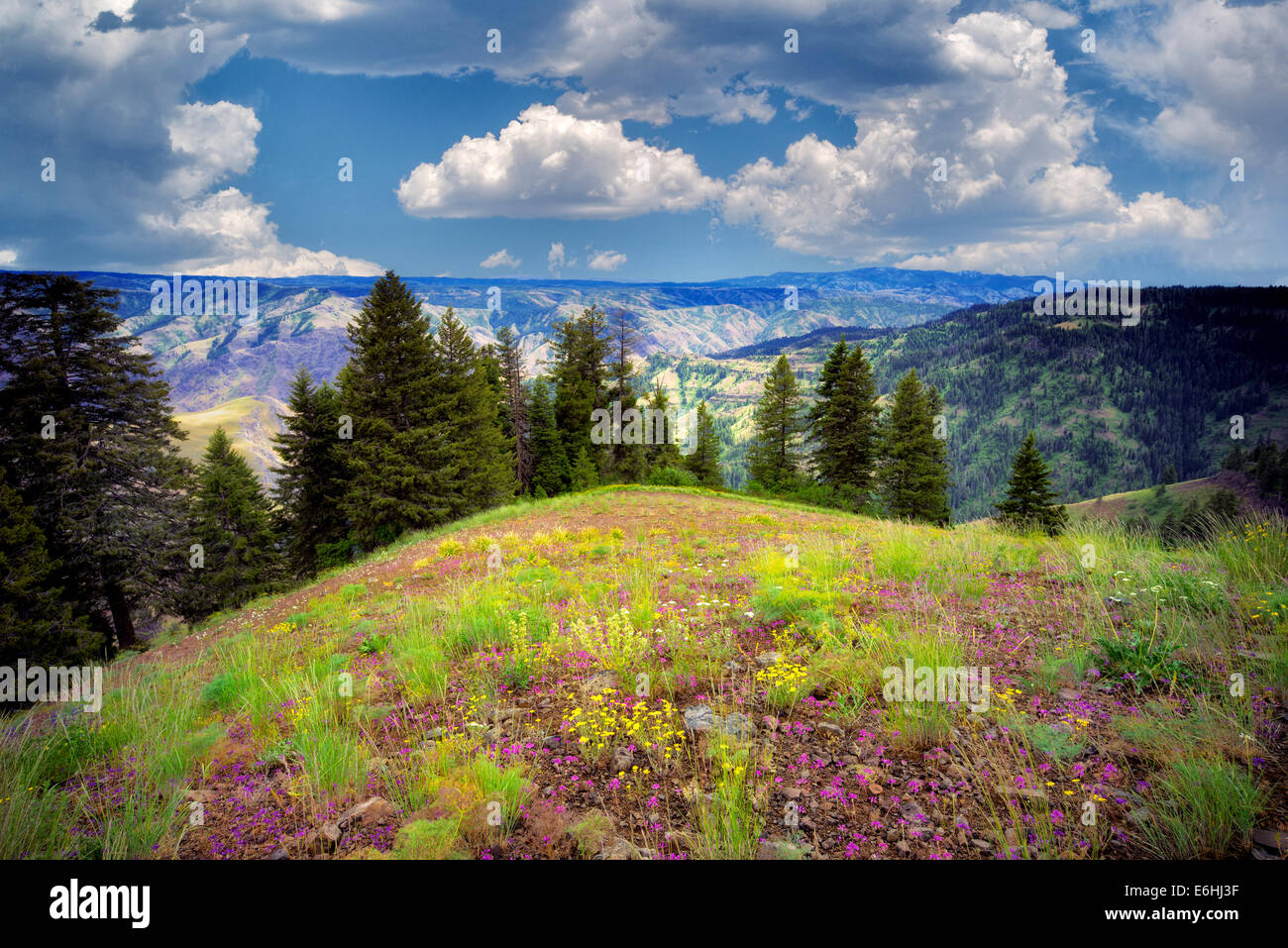 Wildflowers and clouds. Hell's Canyon Overlook, Oregon - Stock Image