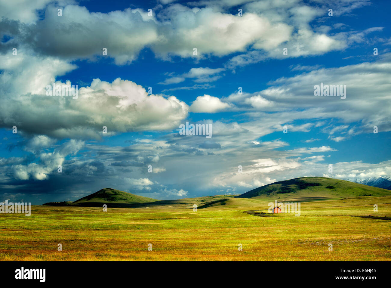 Wildflowers in pasture with barn. Zumwalt Prairie Preserve, Oregon - Stock Image