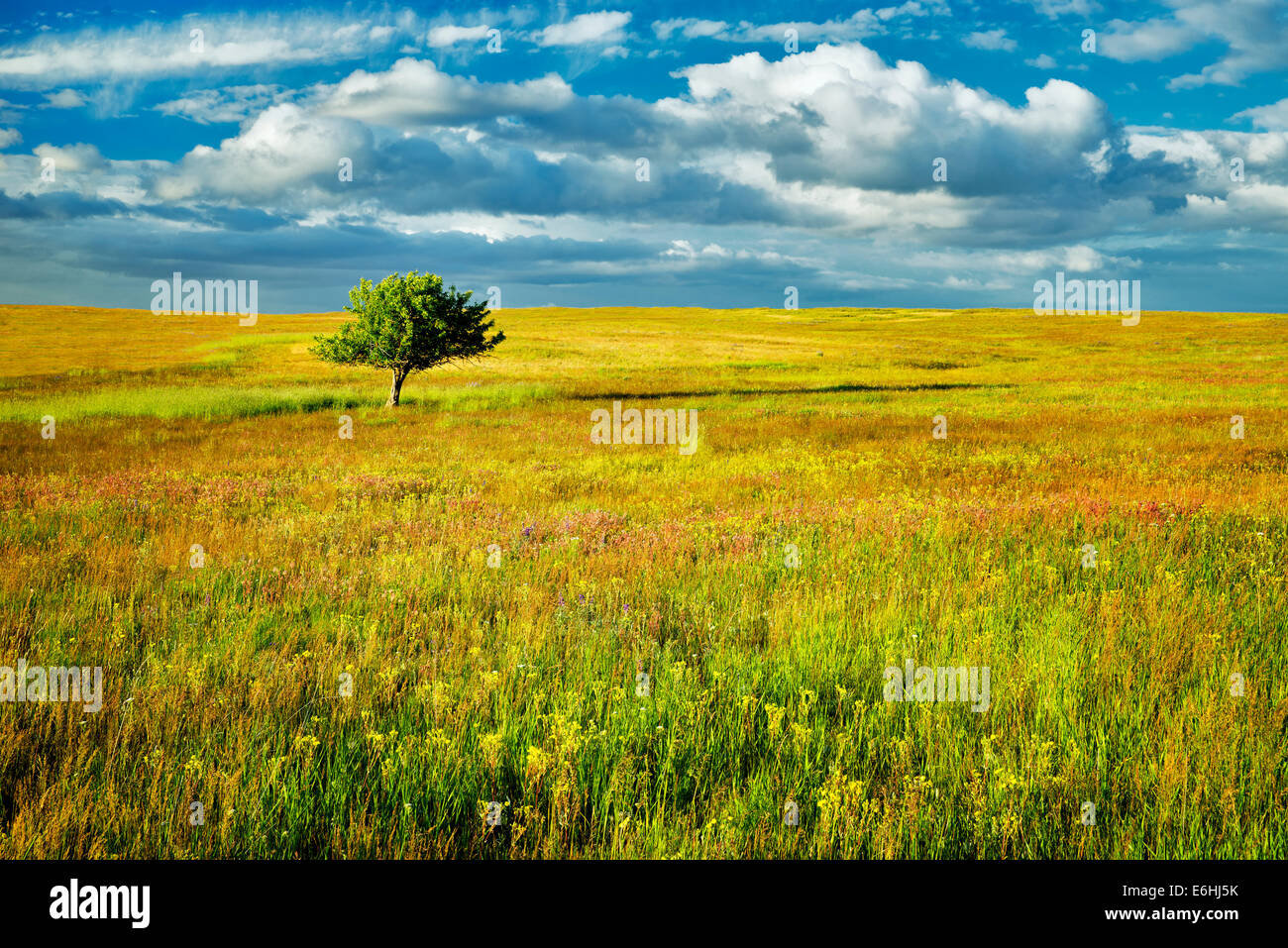 Lone tree and wildflowers. Zumwalt Prairie Preserve, Oregon - Stock Image