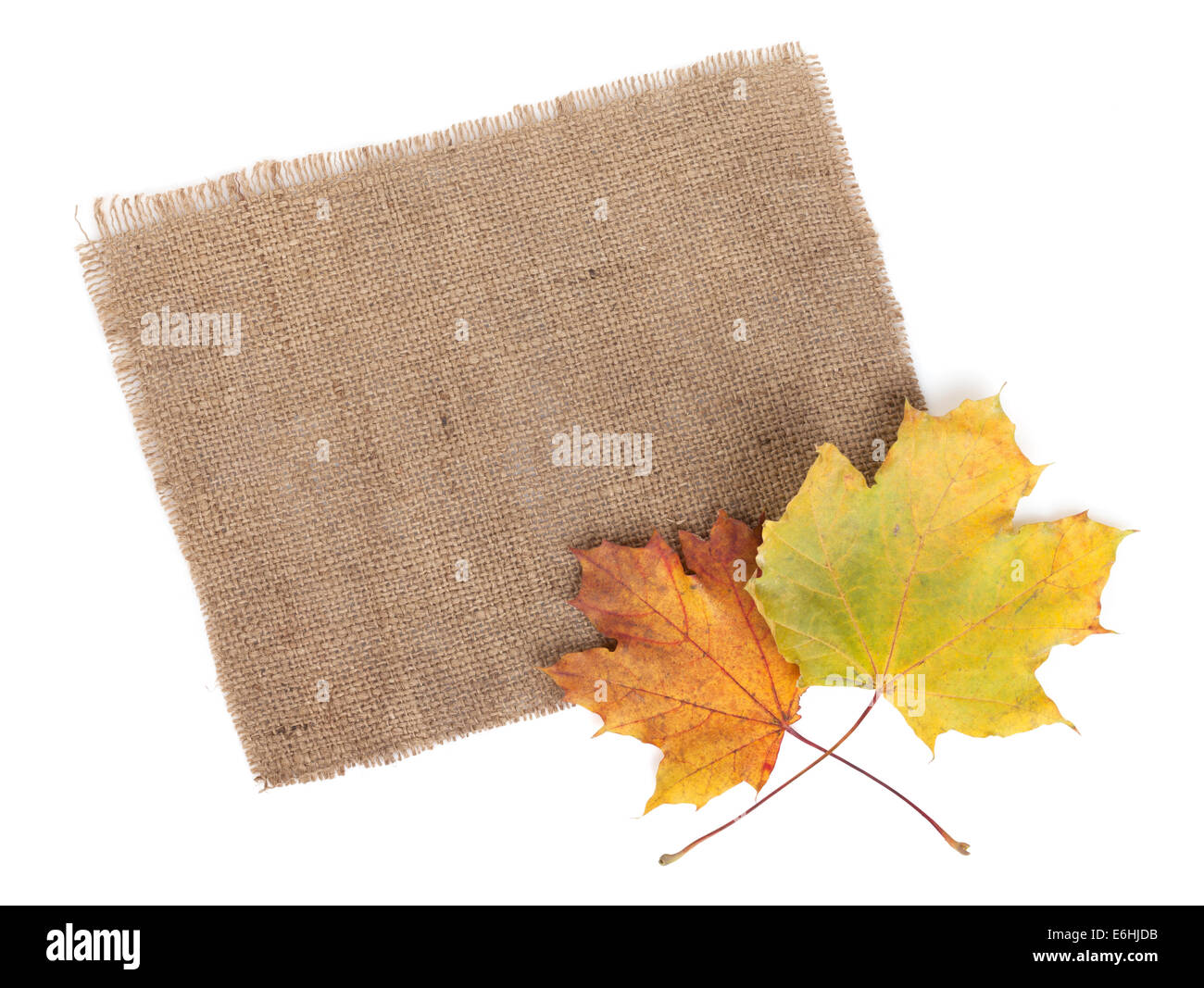 Scrap of burlap and autumn maple leaves. Isolated on white background - Stock Image