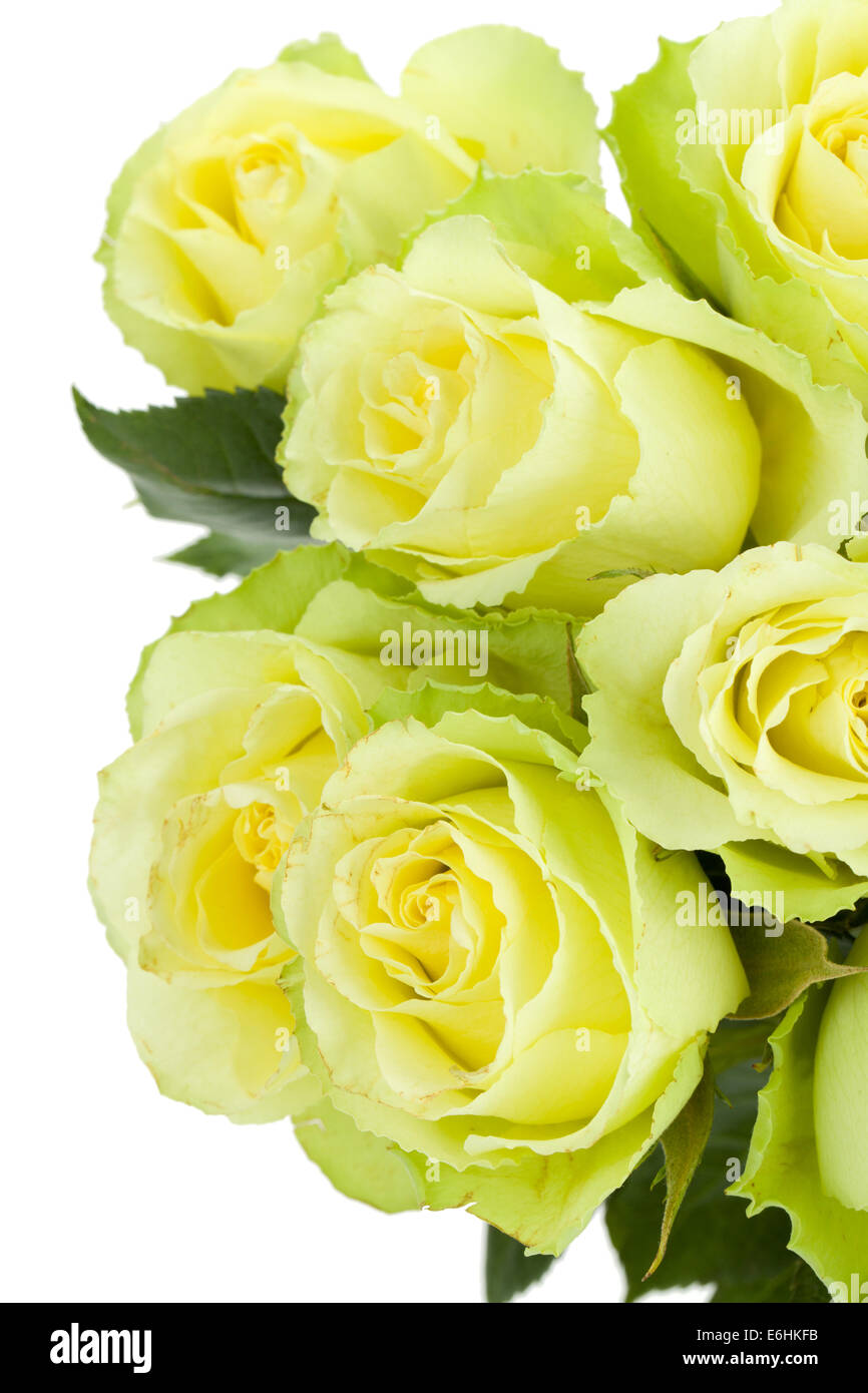Green Roses Bouquet Isolated On White Background Stock Photo Alamy