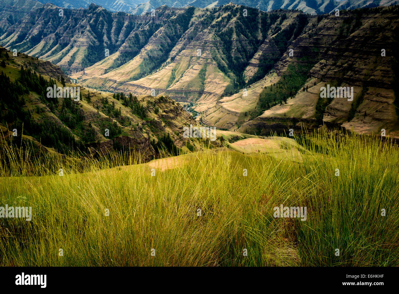 Grasses and Imnaha Canyon. Hells Canyon National Recreation Area, Oregon - Stock Image