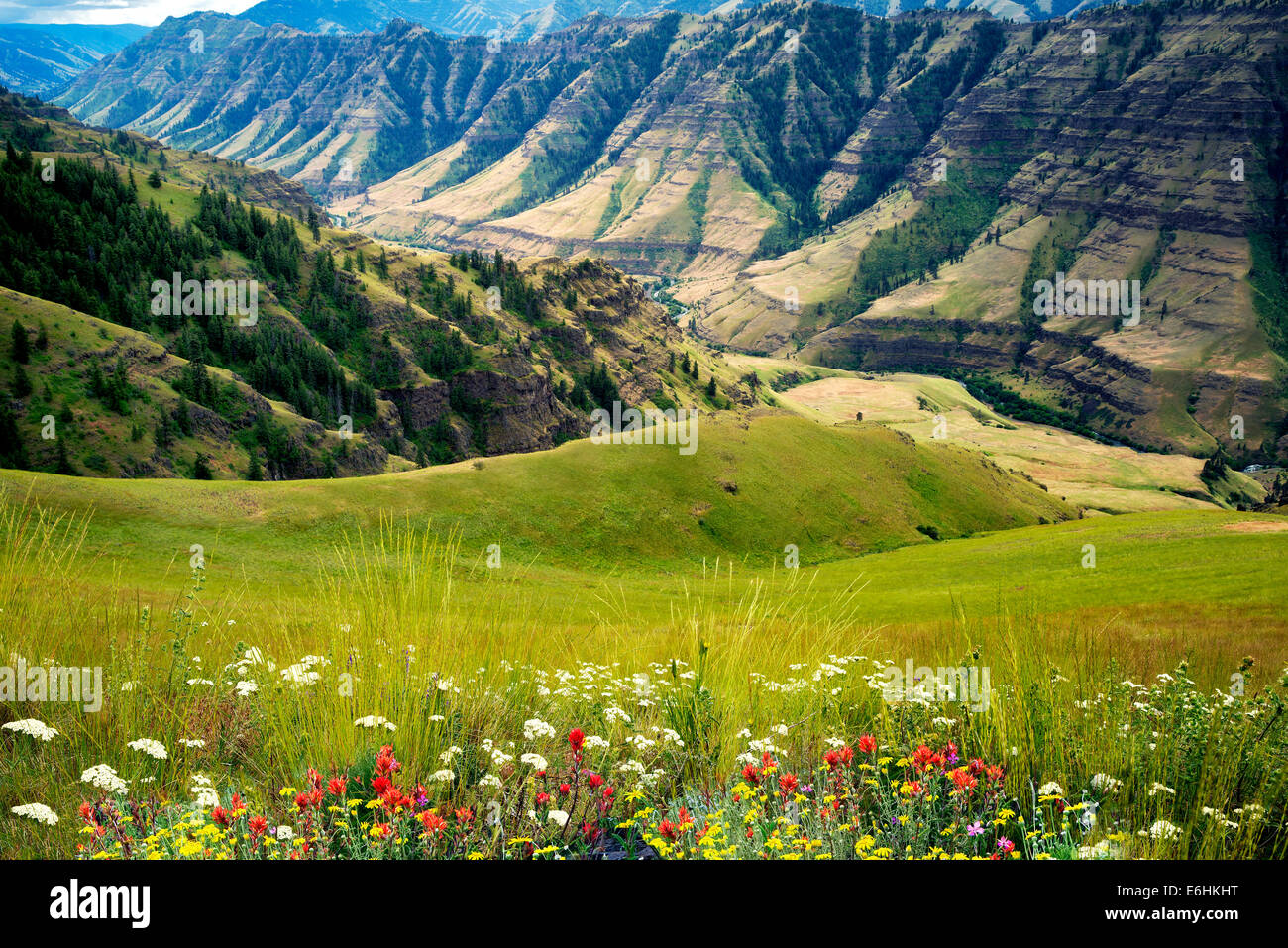 Wildflowers and Imnaha Canyon. Hells Canyon National Recreation Area, Oregon - Stock Image