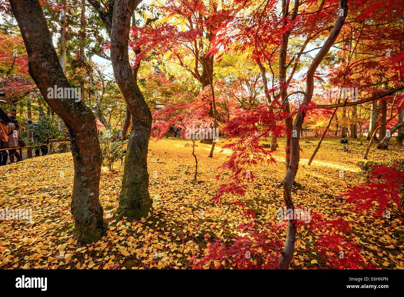 Kyoto, Japan fall foliage at Eikando Temple grounds. - Stock Image