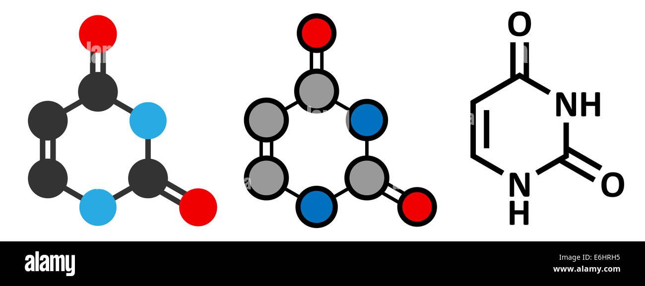 Uracil (U) nucleobase molecule. Present in ribonucleic acid (RNA). Stylized 2D renderings and conventional skeletal - Stock Image