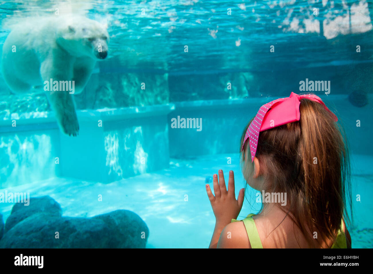 tdy shy makes mor com canonical japan featured zoo vid today debut watch video watches desktop in polar cub bear