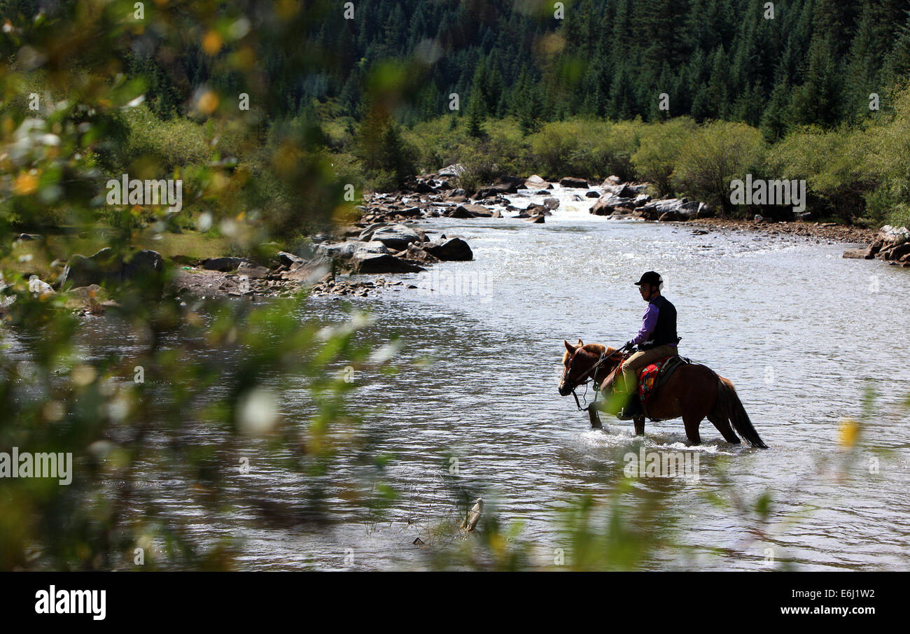 (140825) -- ZHANGYE, Aug. 25, 2014 (Xinhua) -- A tourist rides a horse to cross a river at the Shandan Horse Ranch Stock Photo