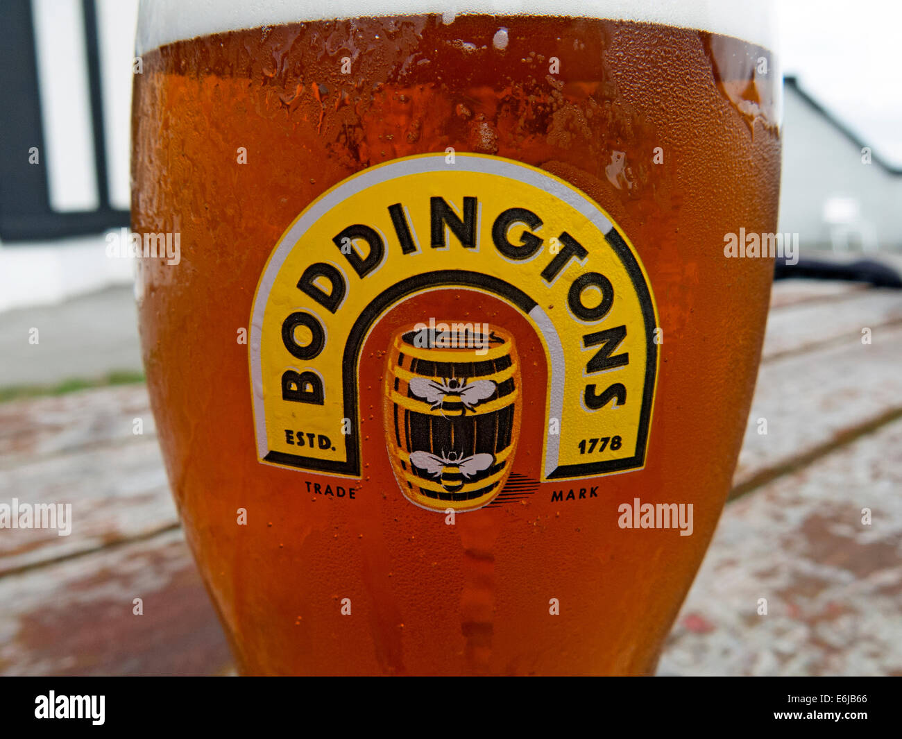 Glasses of Boddingtons Bitter from Manchester in a pint glass - Stock Image