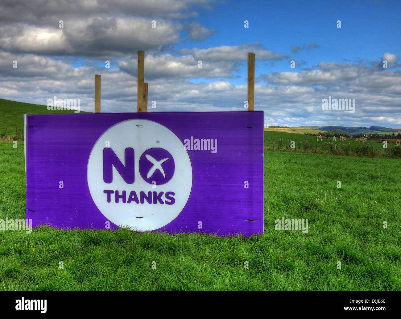 No Thanks Purple Better Together banner in a Scottish Field September 2014 - Stock Image