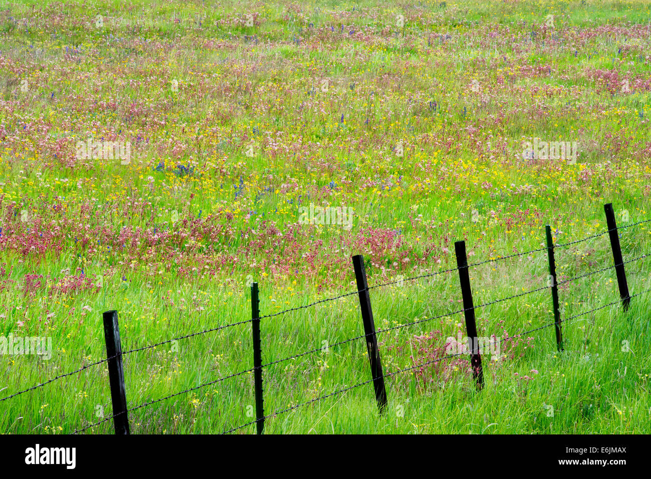 Fence line with wildflowers. Zumwalt Prairie Preserve, Oregon - Stock Image