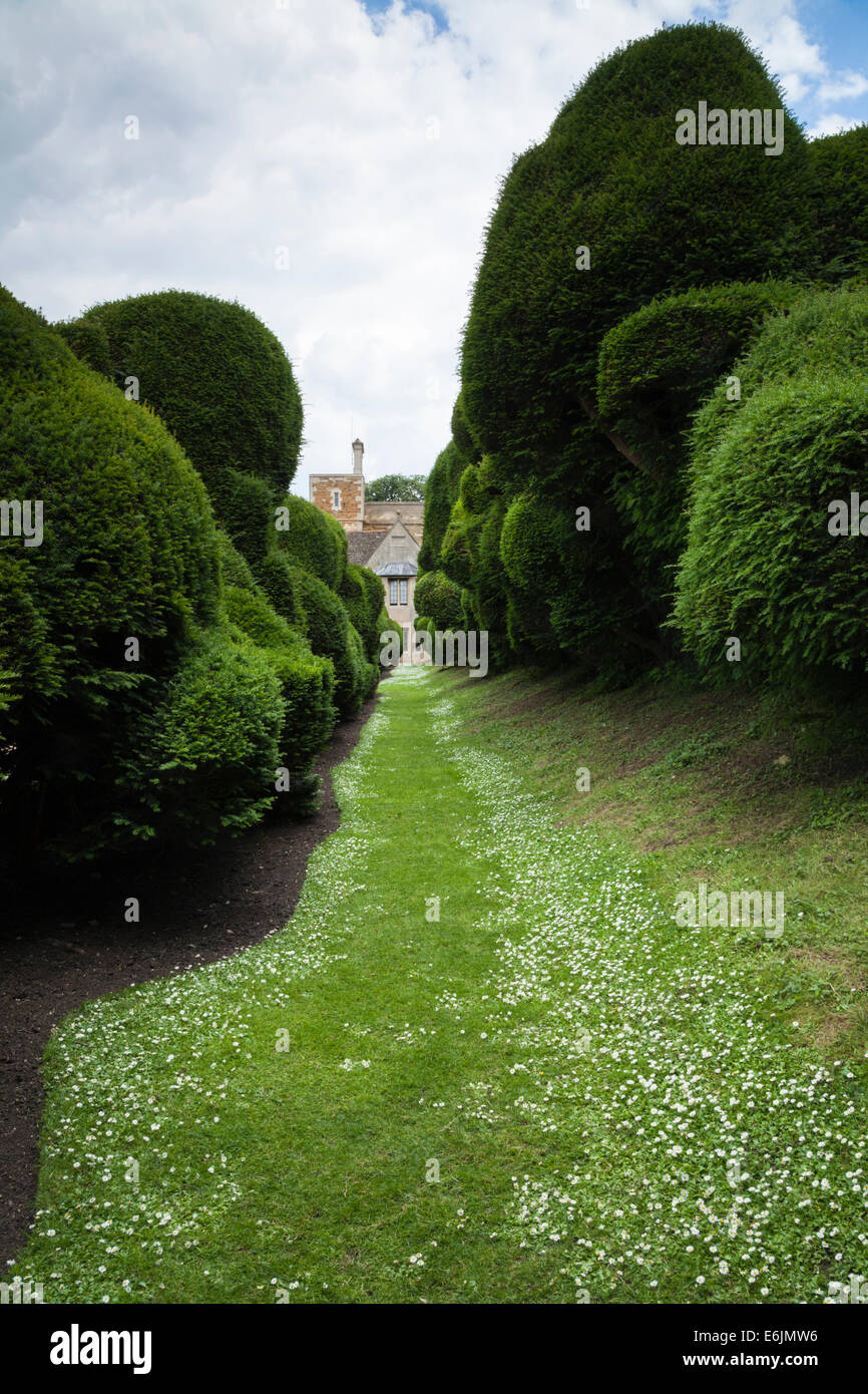 Grass path looking along the large shaped double yew hedge known as the 'Elephant hedge' at Rockingham Castle, - Stock Image