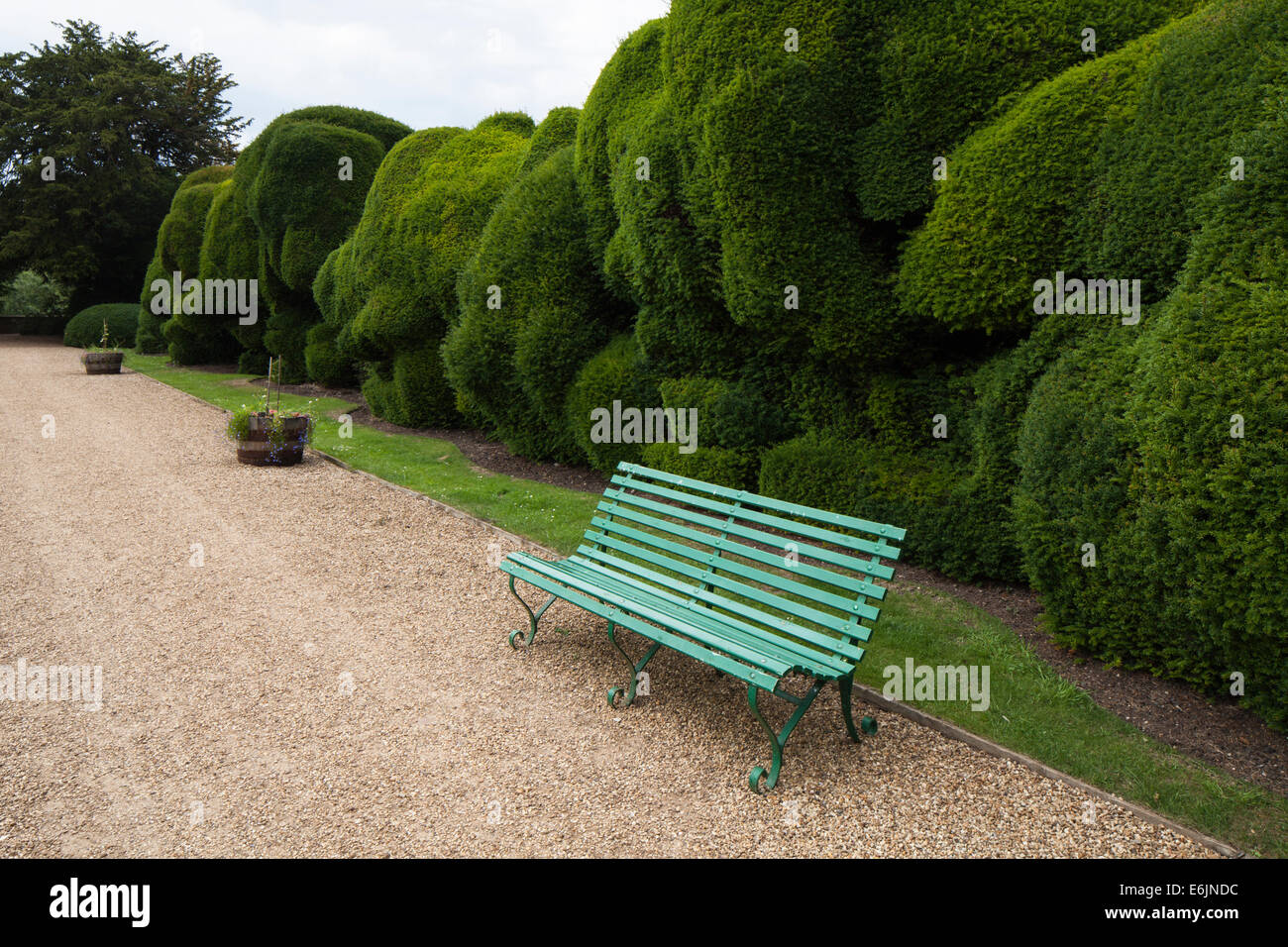 A Wooden Bench Beside The Giant Double Yew Hedge Known As The Stock