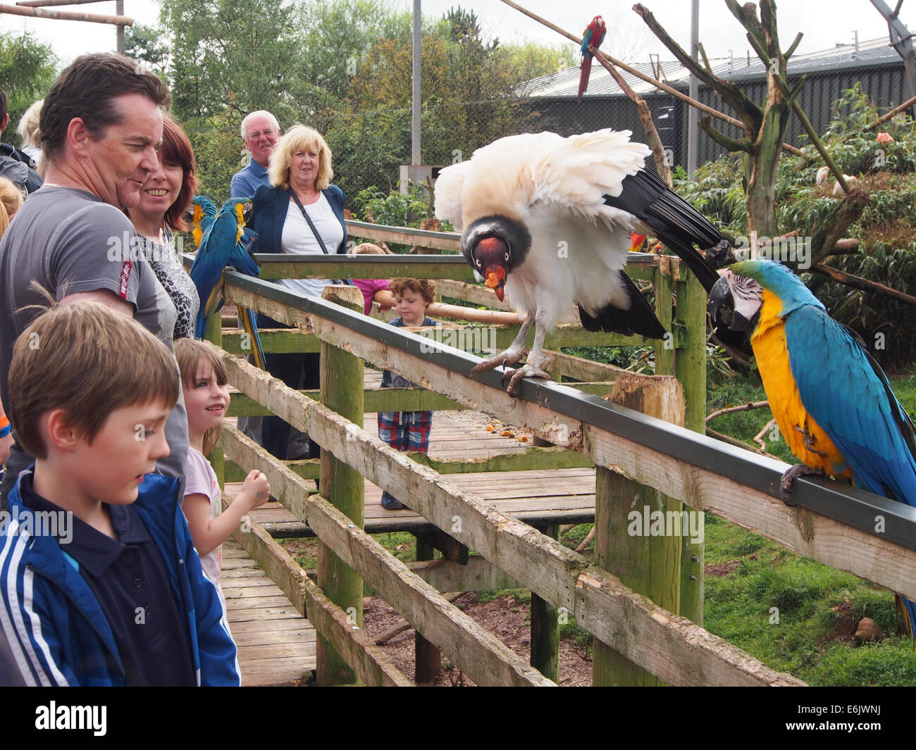 visitors to the south lakes safari zoo watch the free flying birds