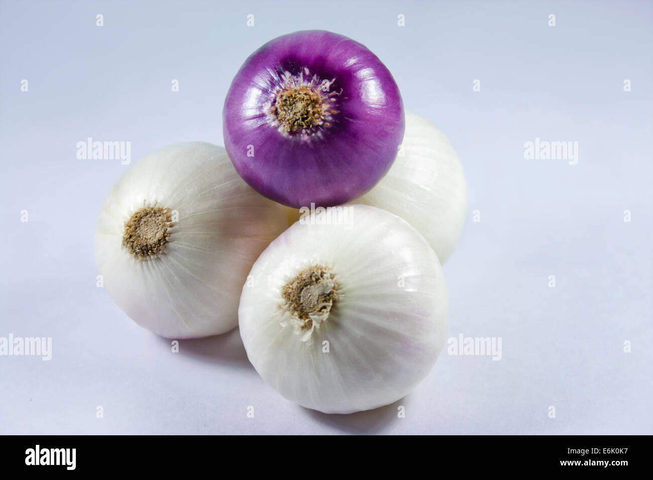 Fore onions on a white background. - Stock Image