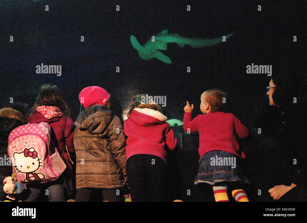 (140826) -- VANCOUVER, Aug. 26, 2014 (Xinhua) -- Kids look at shark in Vancouver Aquarium in Vancouver, Canada, - Stock Image
