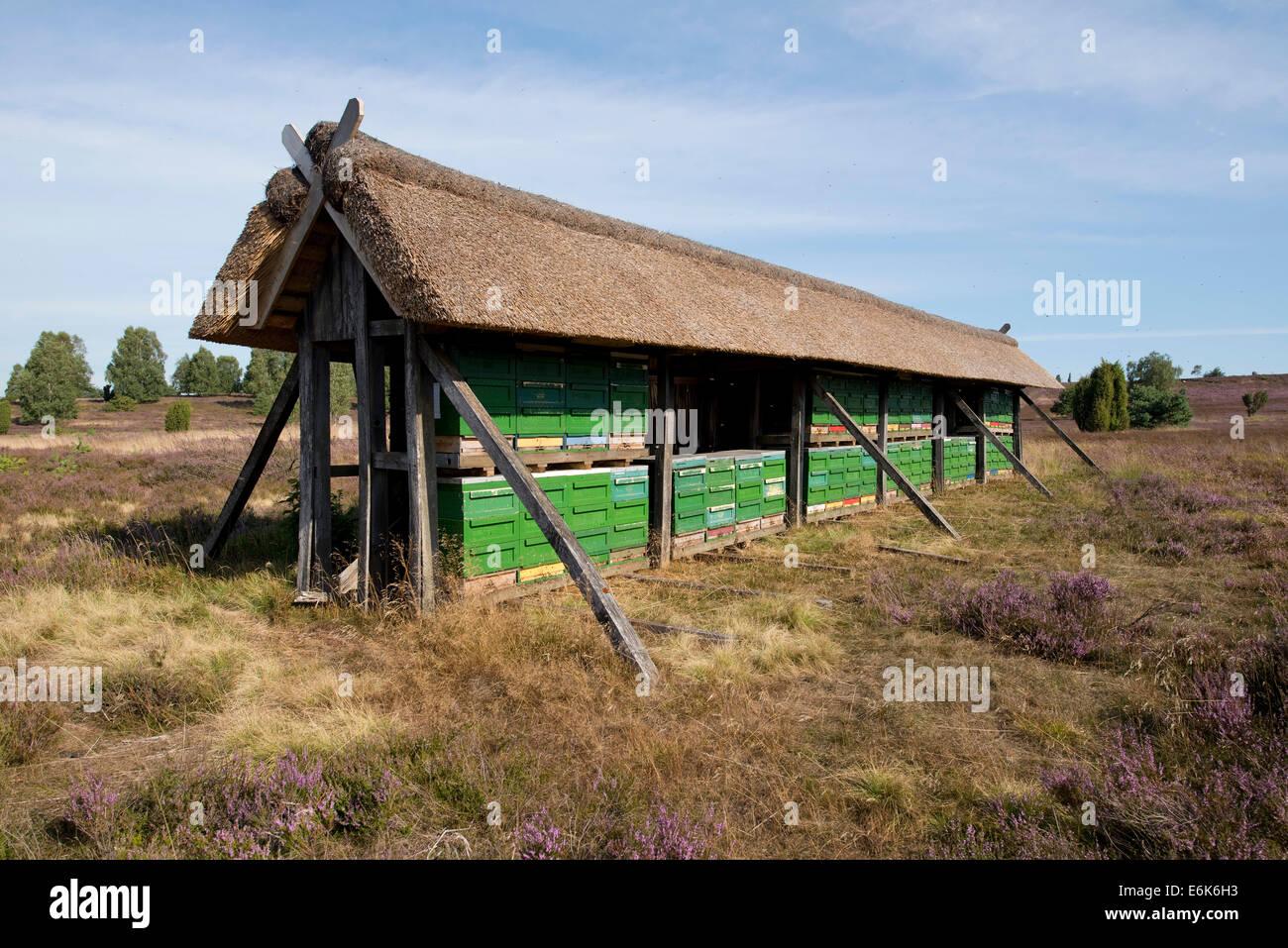 Apiary, Wilsede, Lüneburg Heath Nature Park, Lower Saxony, Germany - Stock Image