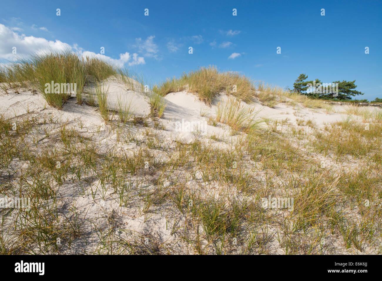 Dunes, Darßer Ort, Darß, Western Pomerania Lagoon Area National Park, Mecklenburg-Western Pomerania, Germany - Stock Image