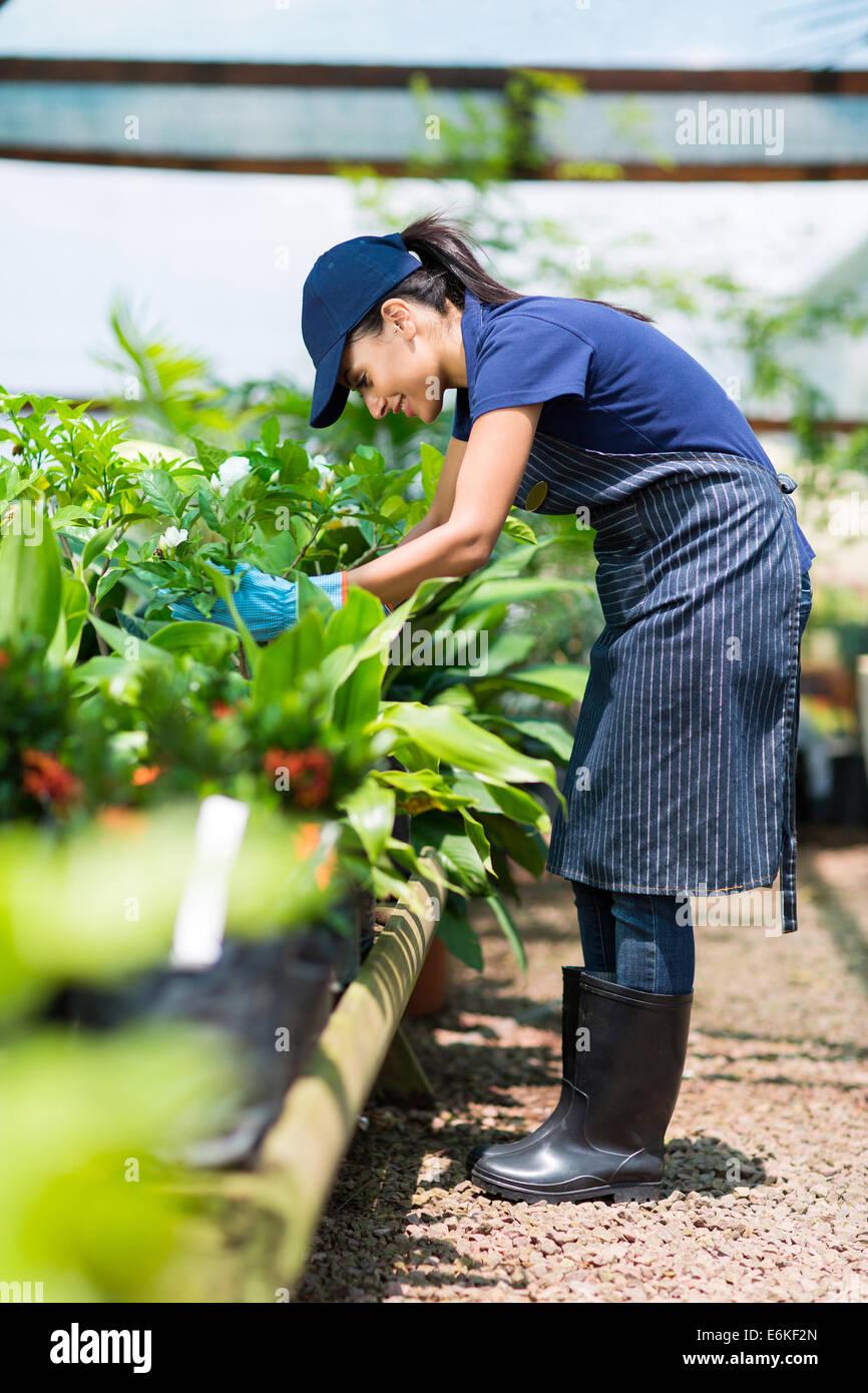 female gardener working inside greenhouse - Stock Image