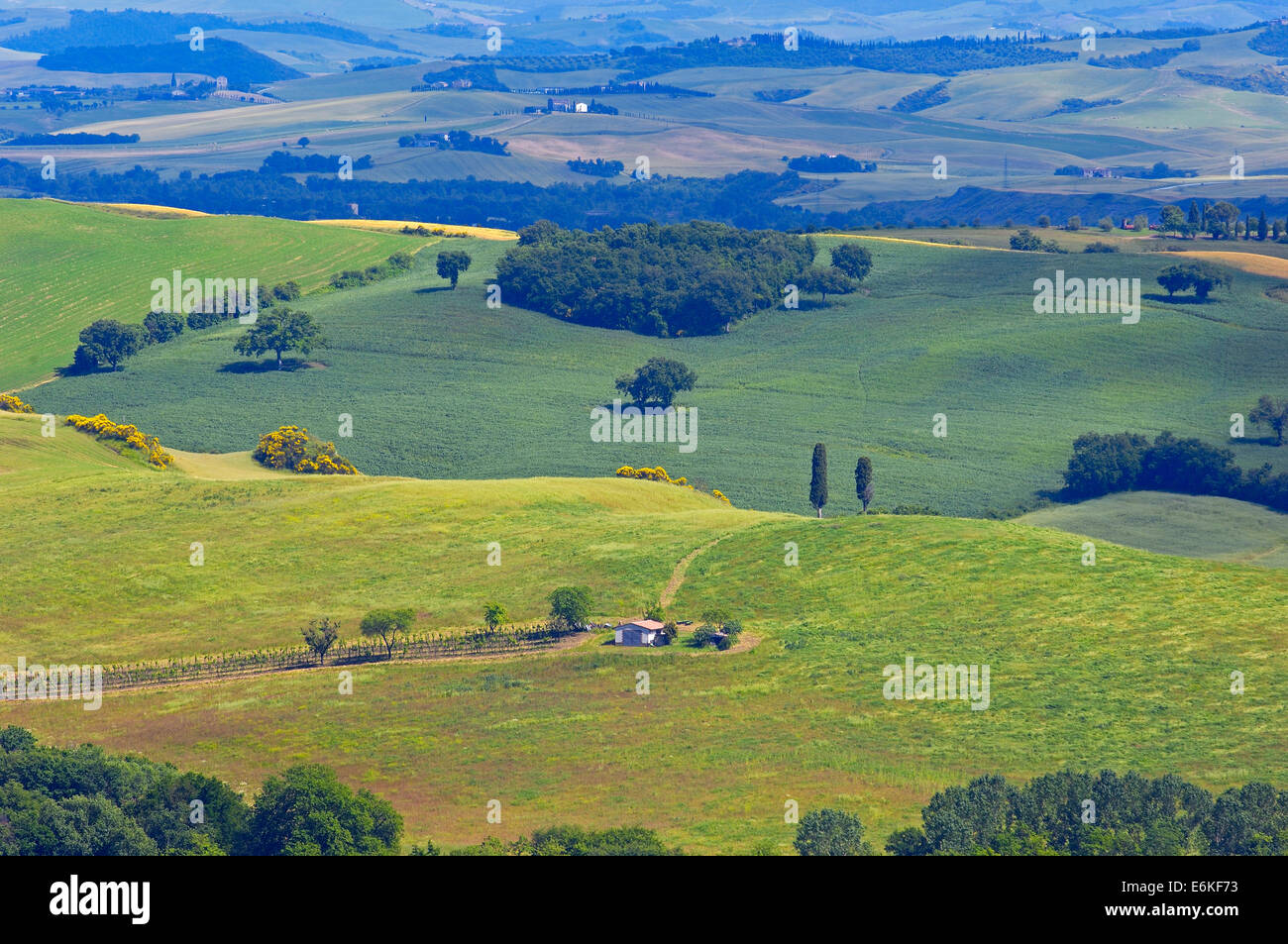 Val d´Orcia, Orcia Valley, Fields and Farmhouses, Tuscany Landscape, UNESCO world heritage site, Siena Province, - Stock Image