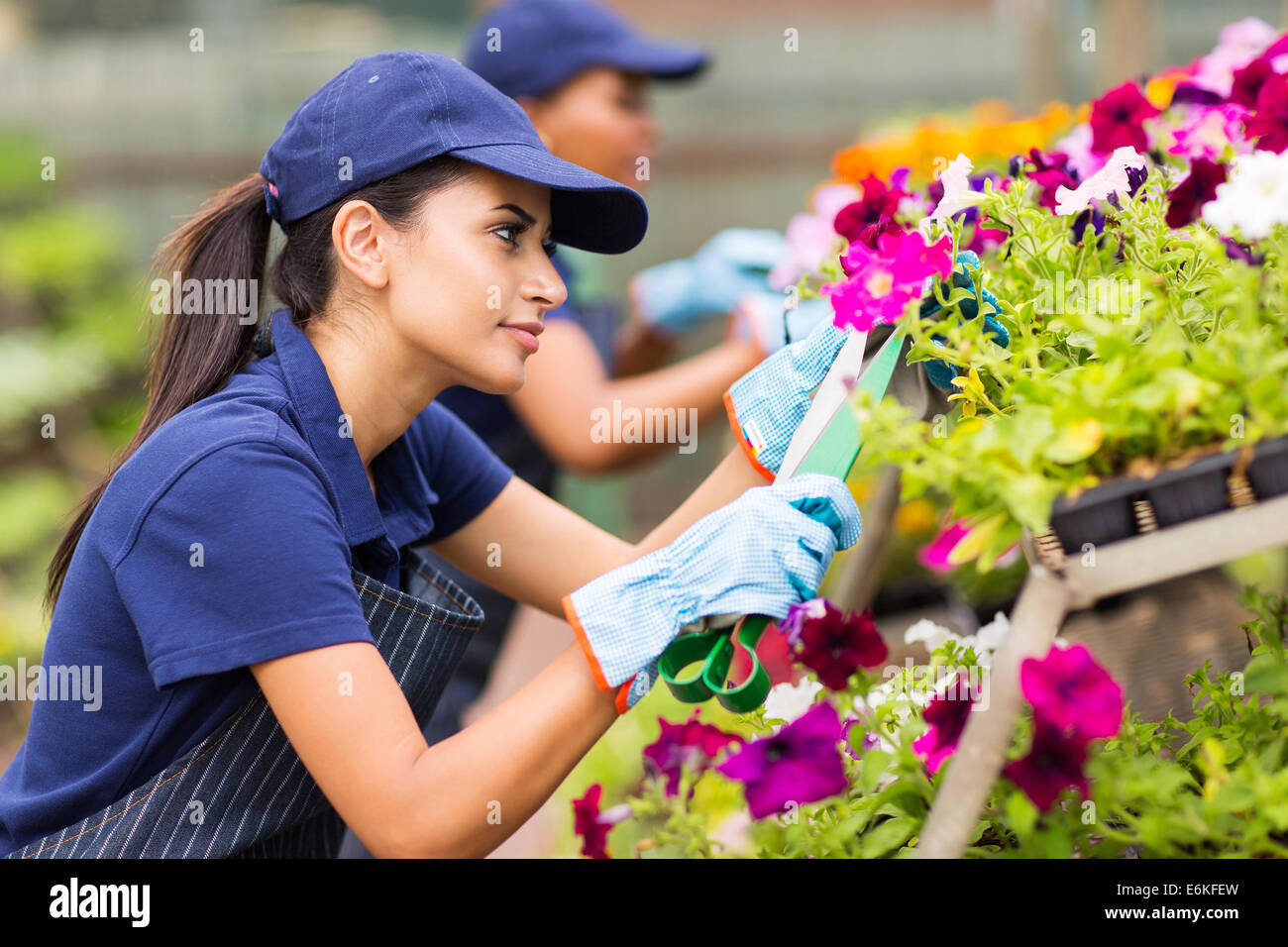 female florist trimming flowers in greenhouse - Stock Image