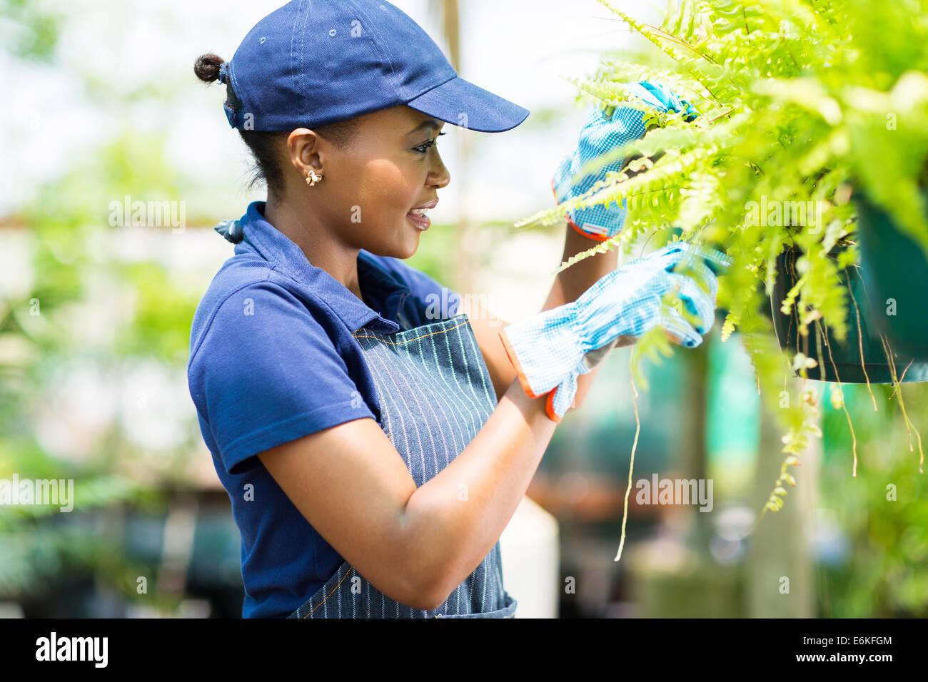 cute African female florist checking flowers condition in greenhouse - Stock Image