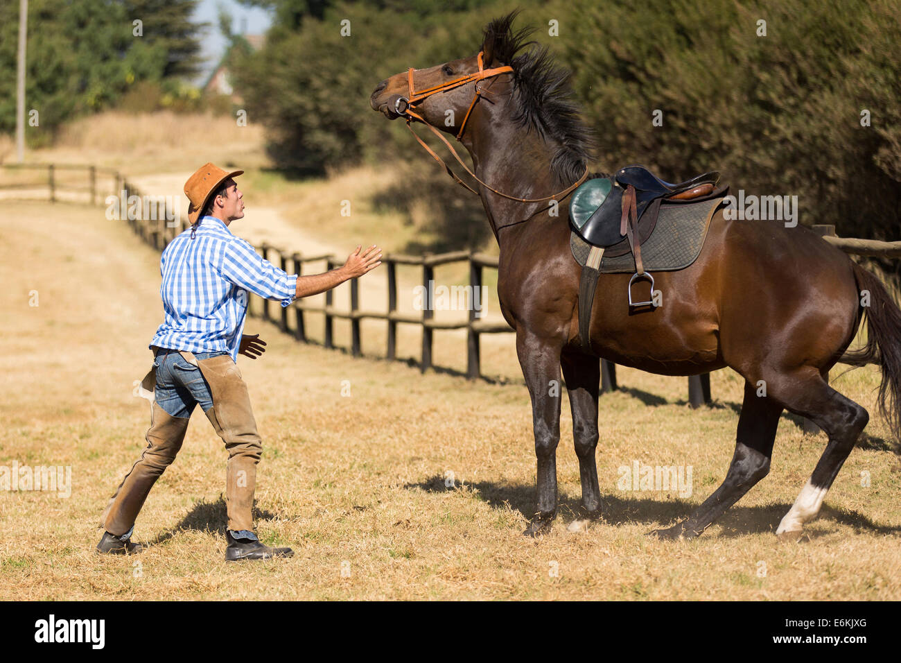 breeder trying to calm down his horse - Stock Image