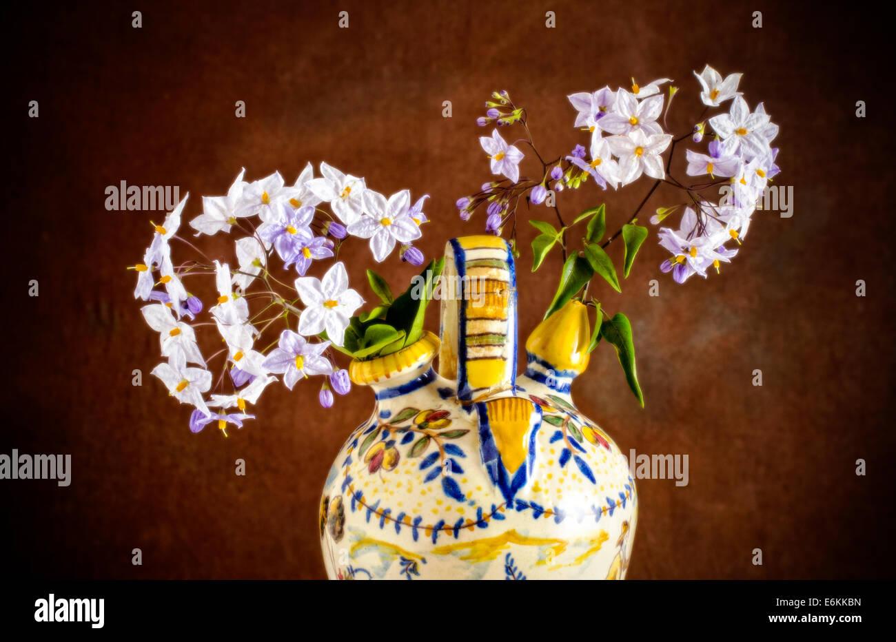Sprigs of flowering potato Jasmine in an old Spanish wine jar - Stock Image