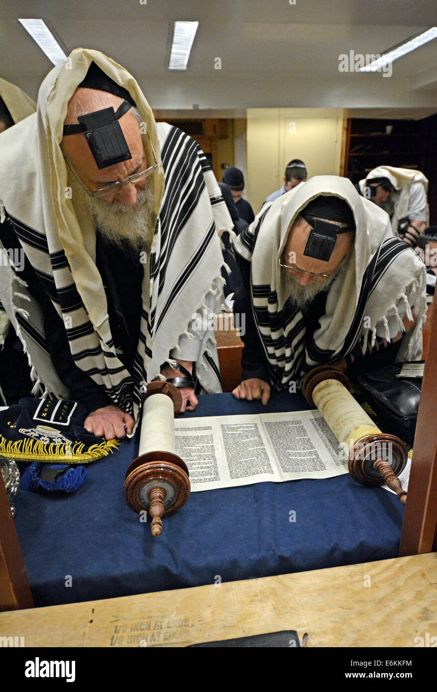 Religious Jewish men reading from the Torah during weekday morning prayers at a synagogue in Brooklyn, New York - Stock Image