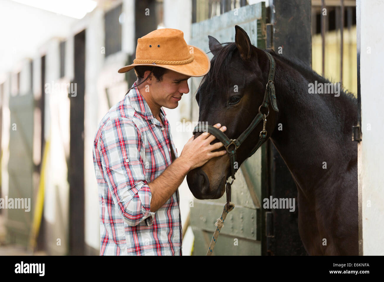 young horse breeder comforting a horse in stable - Stock Image