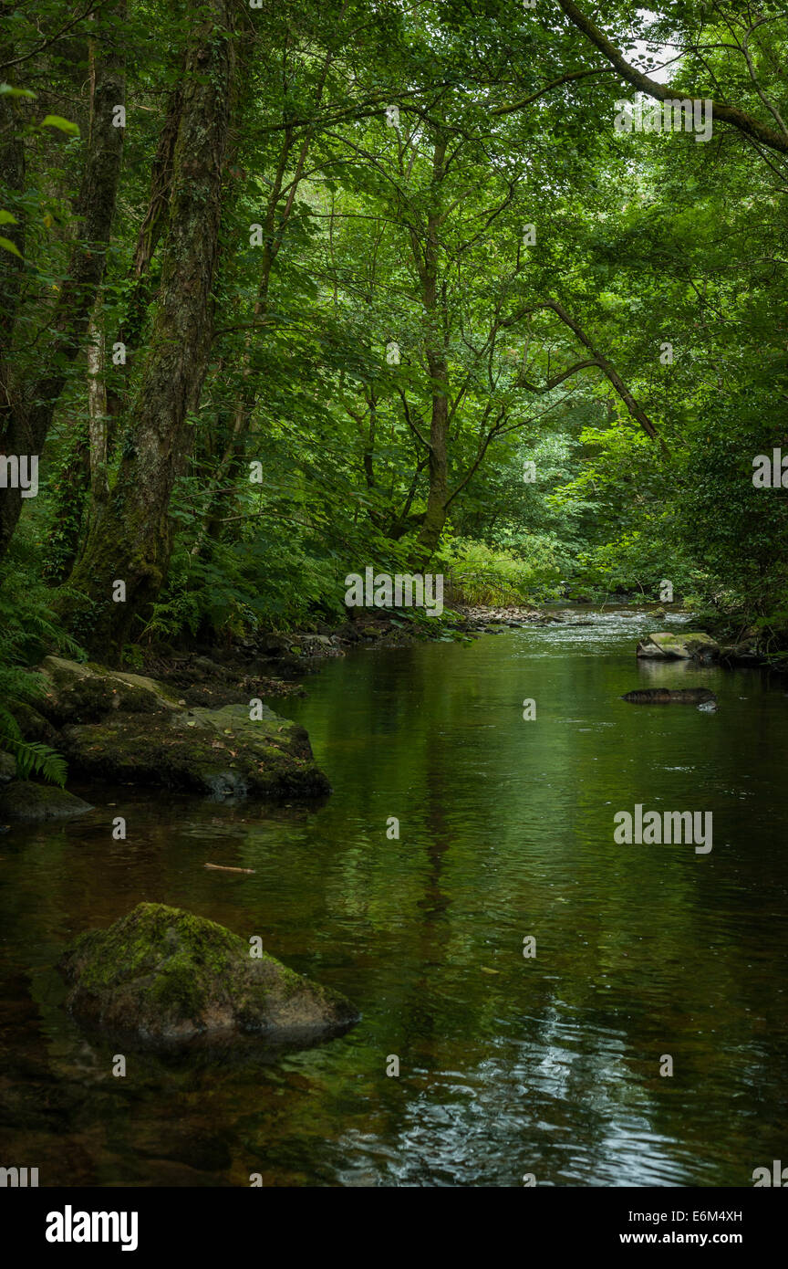 The River Bovey in Bovey Valley Woods, Devon. - Stock Image