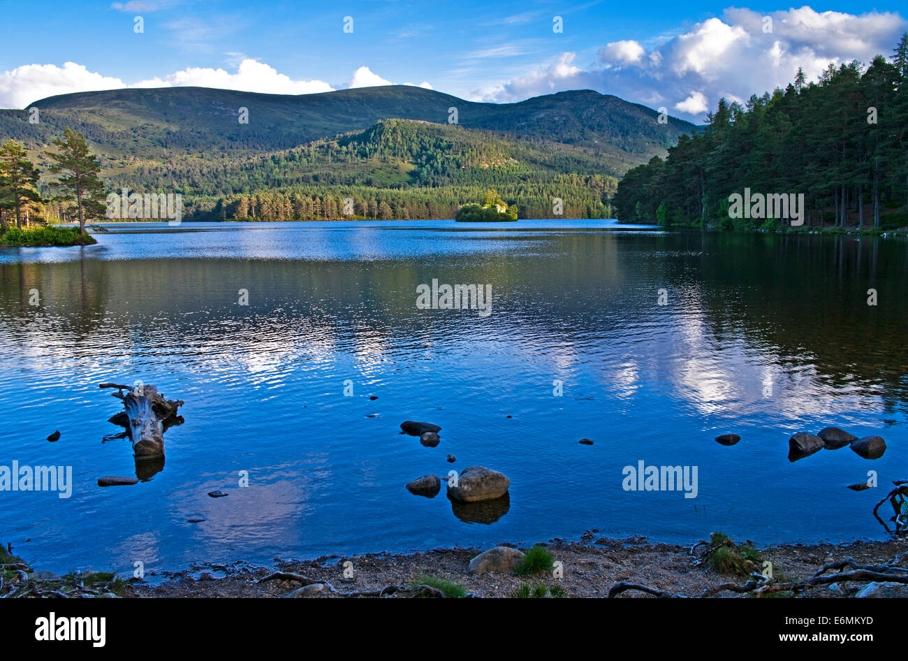 View over Loch an Eilein to the ruined castle and forested hillside, calm summer evening, Cairngorms National Park, - Stock Image