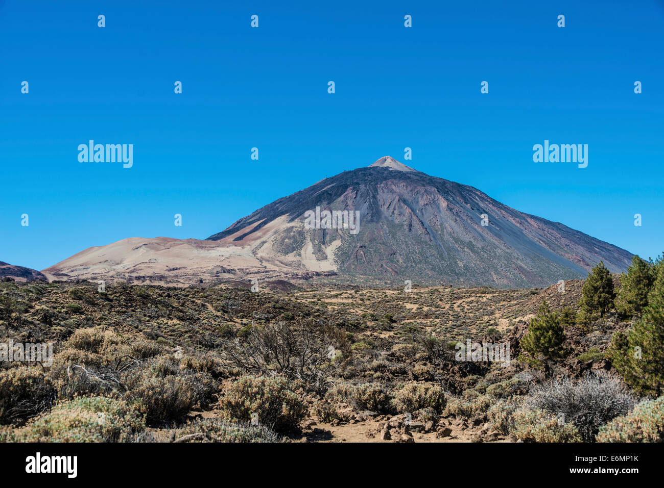 Volcanic landscape, plateau covered with shrubs, Llano de Uruanca with Pico del Teide, 3718m, Parque Nacional de - Stock Image