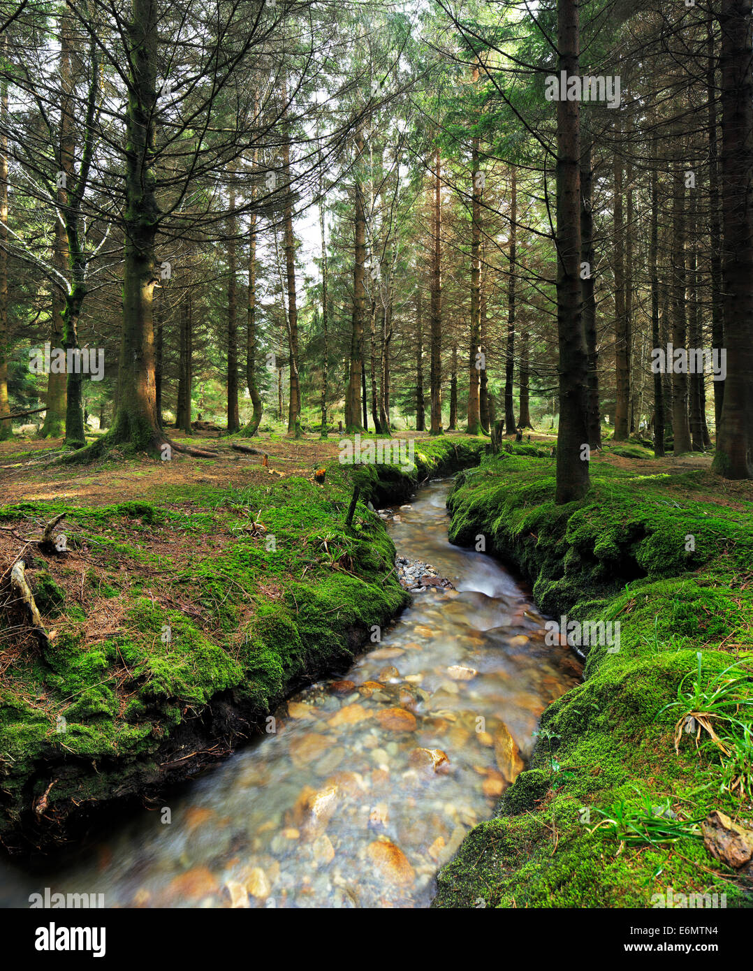 Stream in the forest surrounded by a beautiful scenic - Stock Image