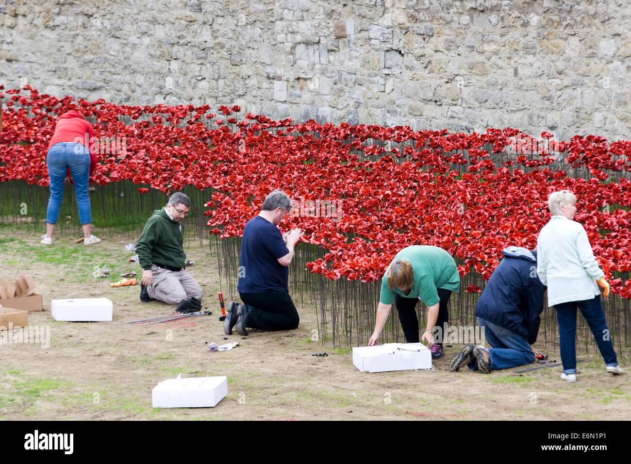 Public making and planting ceramic poppies 'Blood Swept Lands and Seas of Red' First World War' Tower - Stock Image