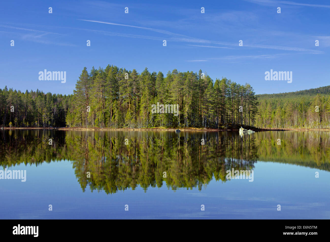 Forest with spruce trees along lake Gryssen in spring, Dalarna, Sweden, Scandinavia - Stock Image