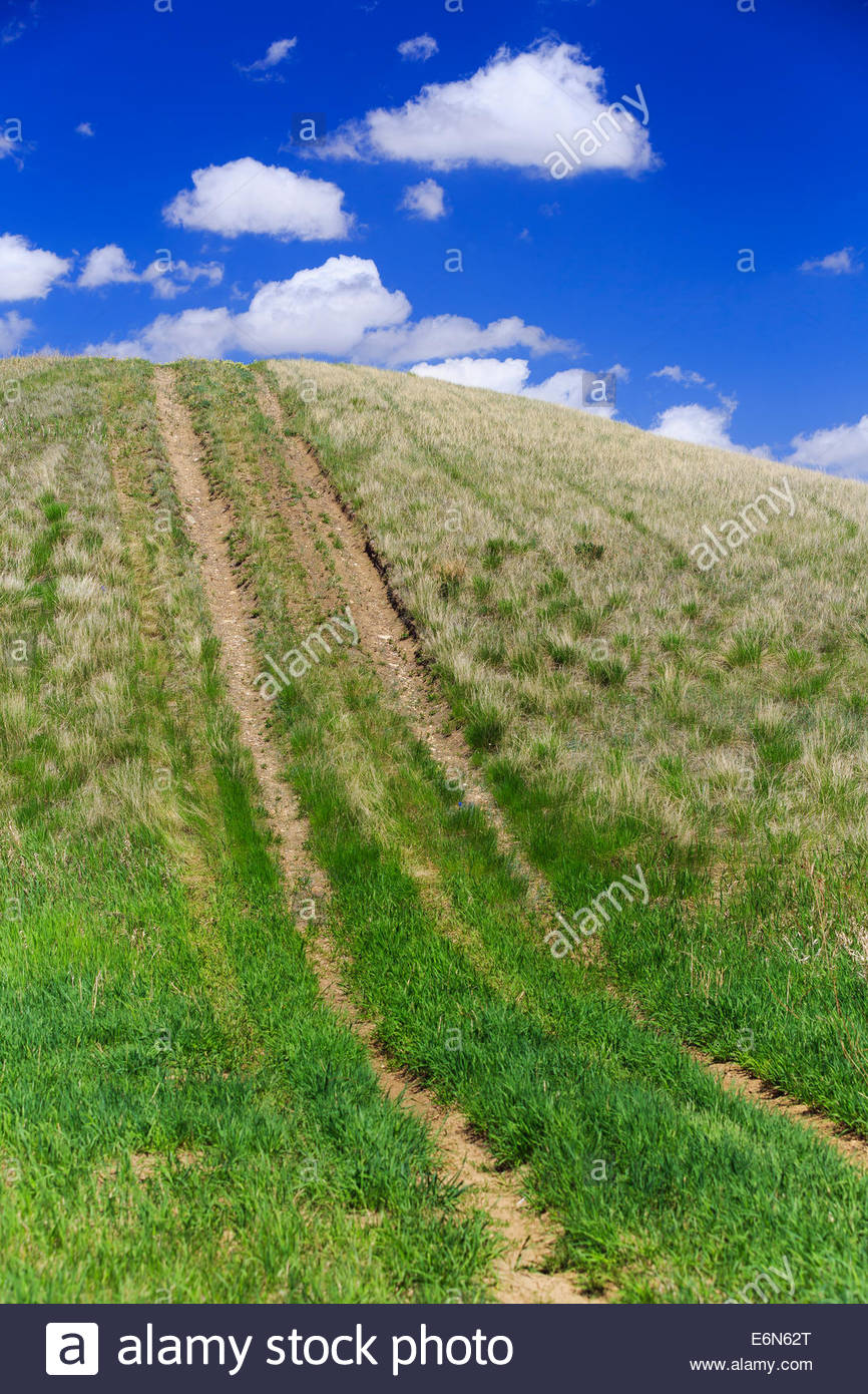 Tire tracks on a hill, Cypress Hills, Saskatchewan, Canada - Stock Image