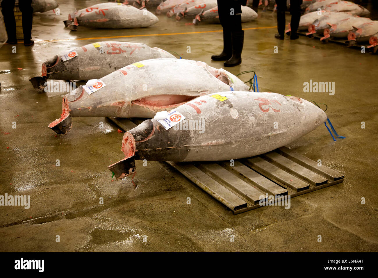 Auction room stock photos auction room stock images alamy for Wholesale fish market los angeles