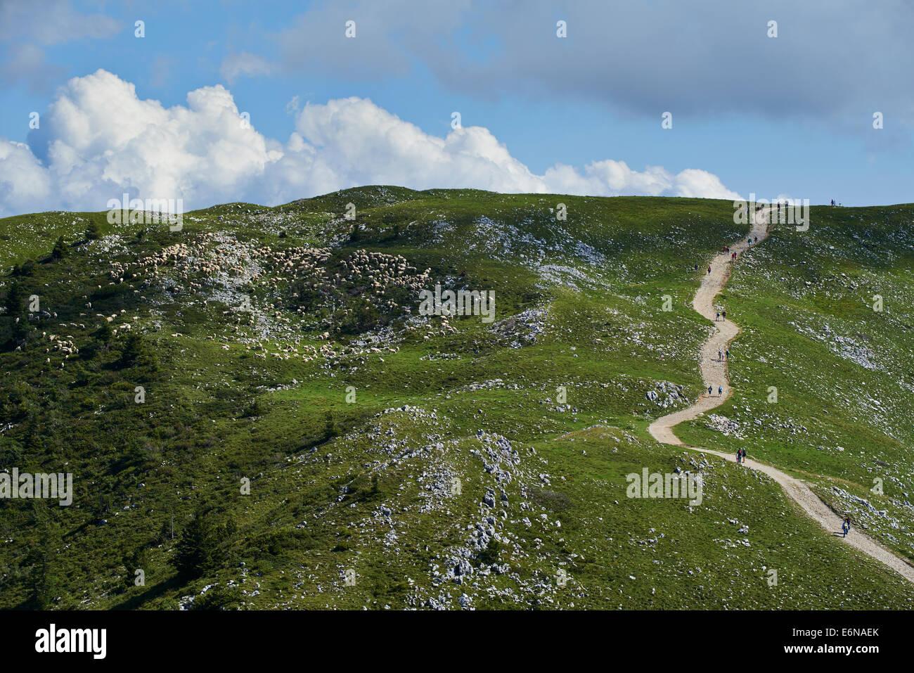 Sheep graze on a hillside of Monte Baldo Italy Alps Mountains Stock Photo
