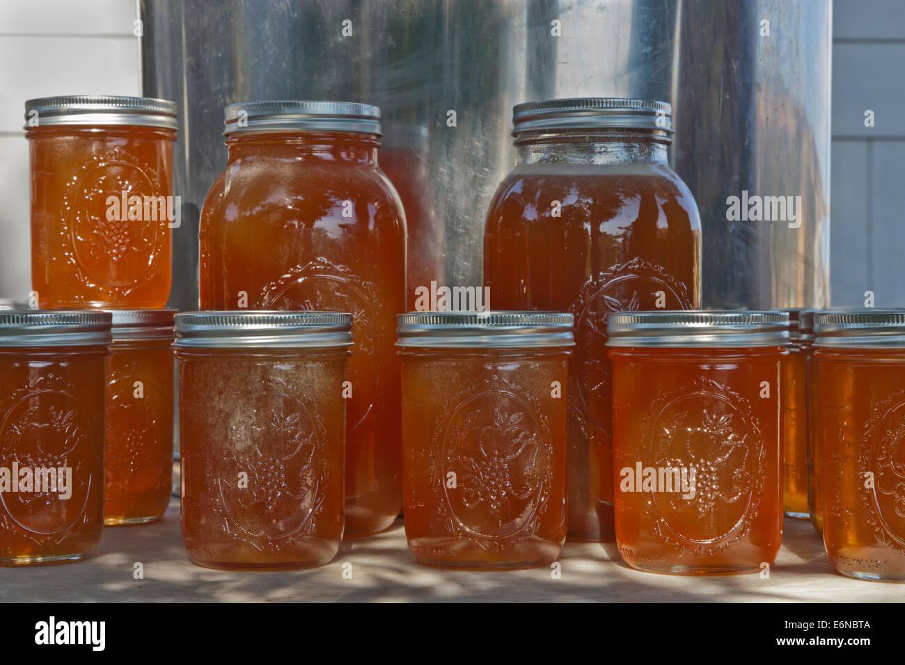 Honey in pint & 2 quart jars. - Stock Image
