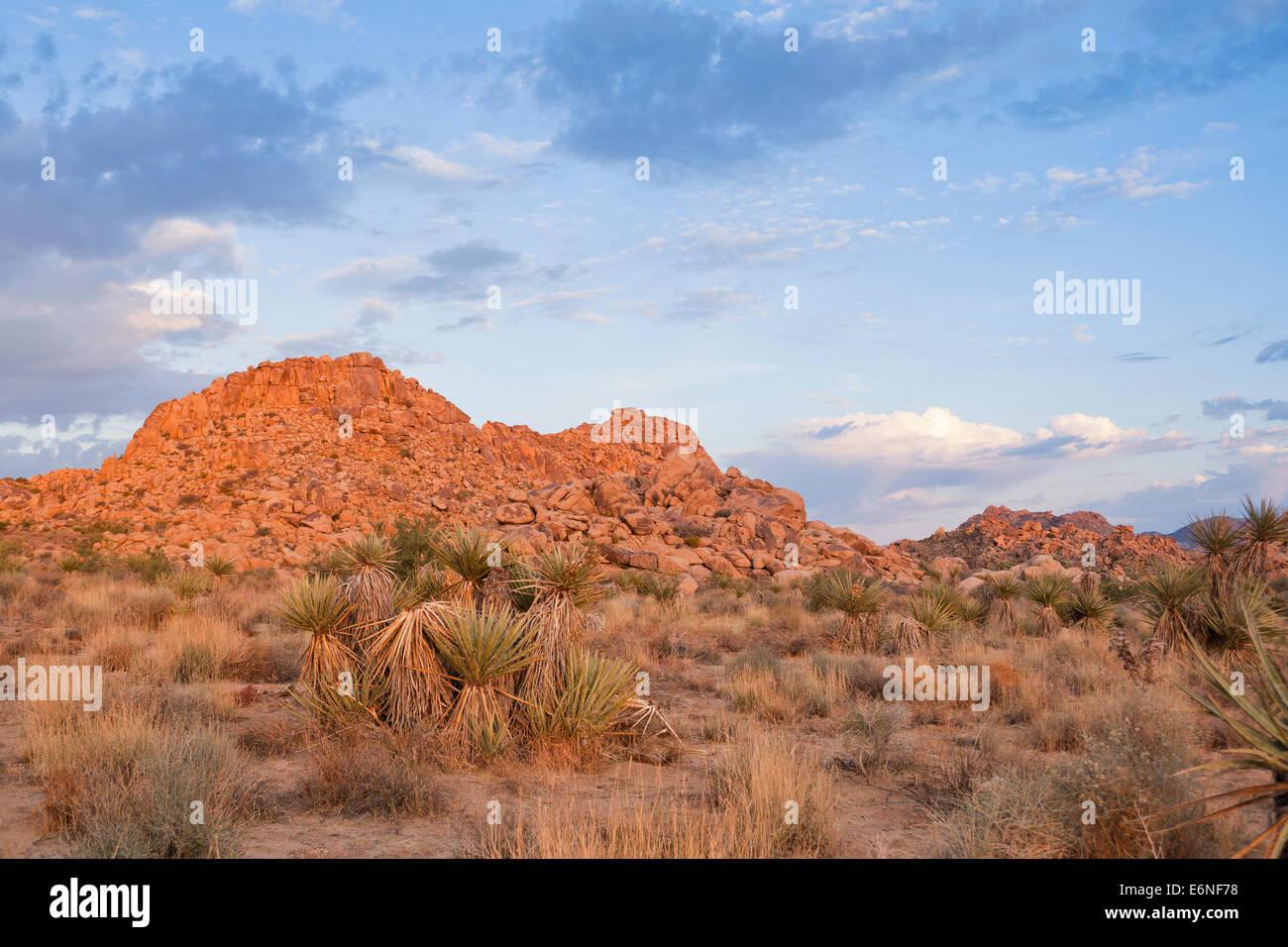 Mojave desert floor - California USA - Stock Image