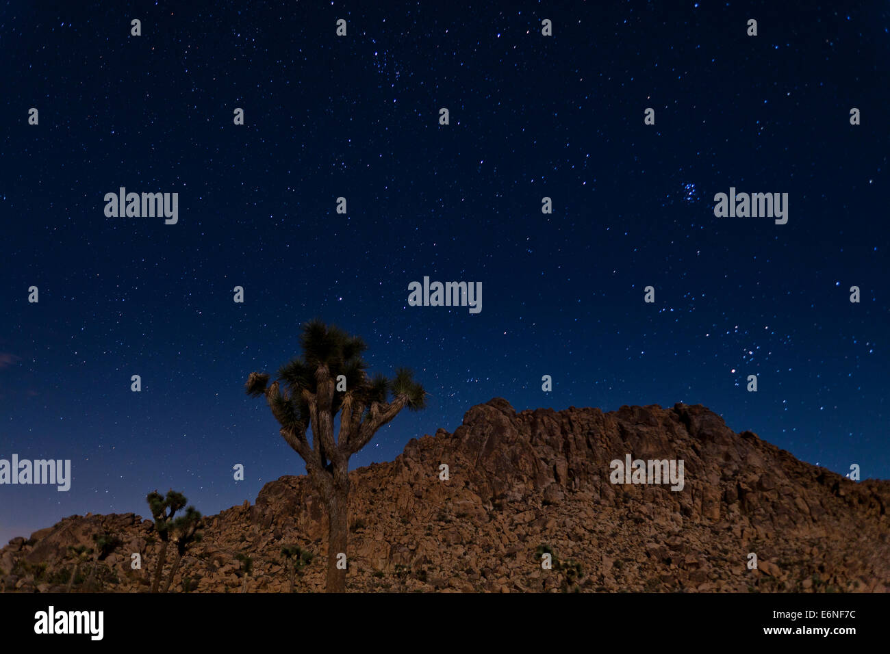 Tree And Starry Night Stock Photos Amp Tree And Starry Night