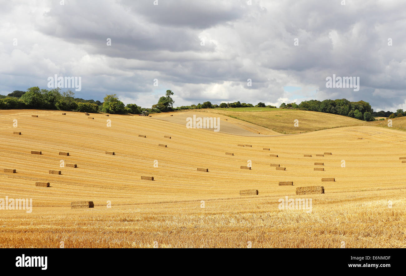 An English Rural Landscape in the Chiltern Hills with fields of golden wheat stubble - Stock Image